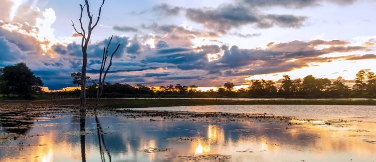 brazilia pantanal