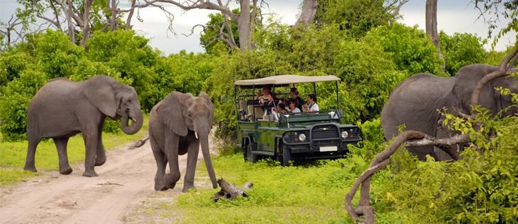 parcul national kruger africa de sud