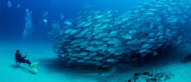 scufundari australia