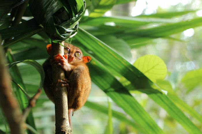 Sejur Madagascar